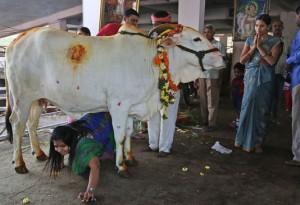 une-fidele-hindoue-durant-le-gopashtami-fete